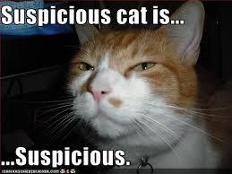 catsuspicious
